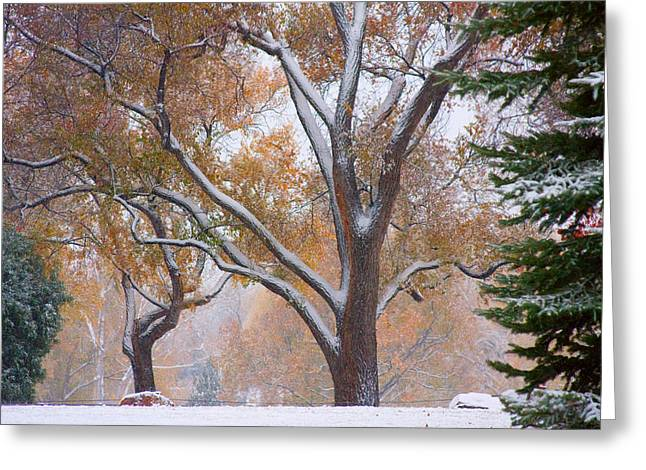 Snowy Autumn Landscape Greeting Card by James BO  Insogna