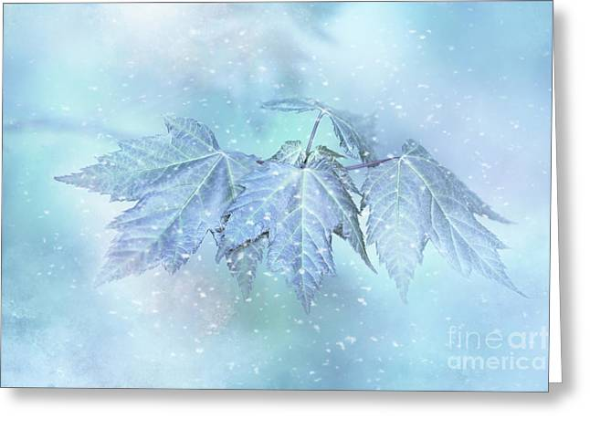 Snowy Baby Leaves Greeting Card