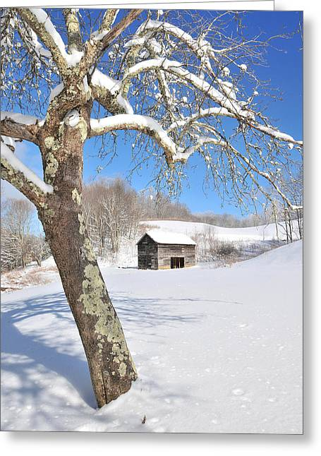 Snowy Barn Framed By Tree Greeting Card by Alan Lenk
