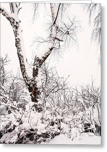Snowy Birch Tree. Russia Greeting Card by Jenny Rainbow