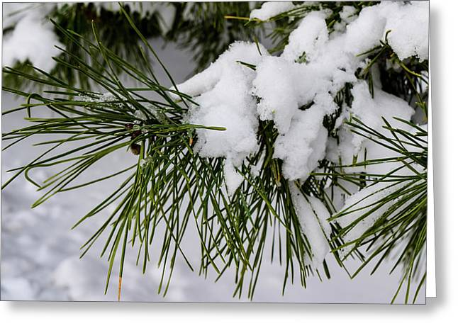 Snowy Branch Greeting Card