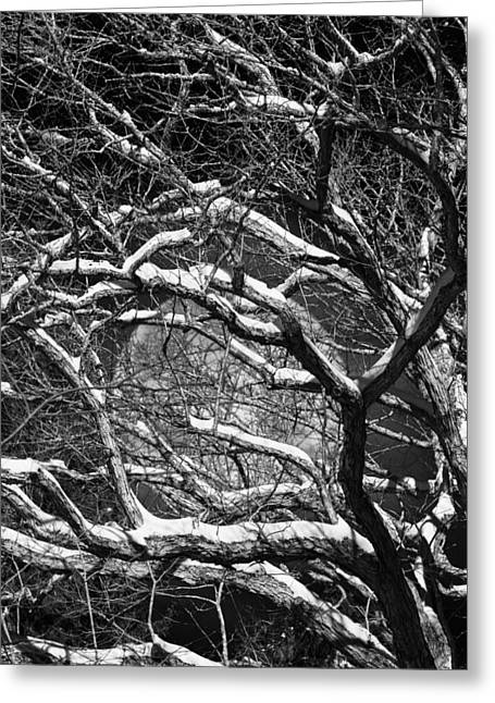 Snowy Branches Against A Full Moon Greeting Card