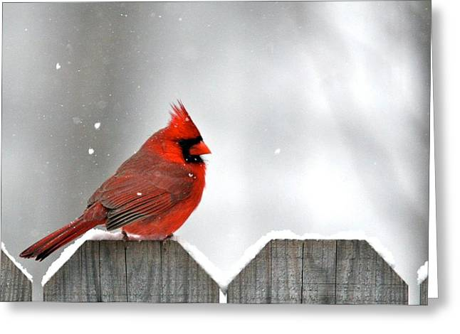 Snowy Cardinal Greeting Card by Debbie Sikes