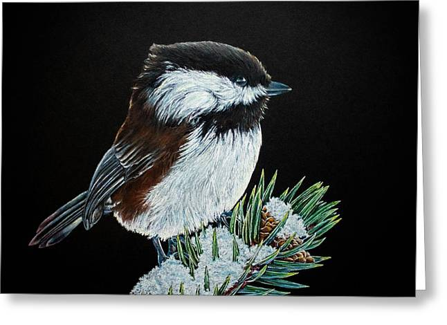 Snowy Chickadee Greeting Card by Kelly Strope