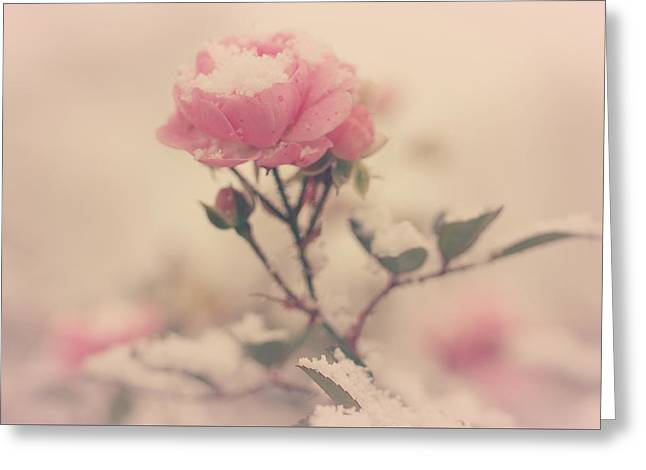 Snowy Day Of Roses Greeting Card