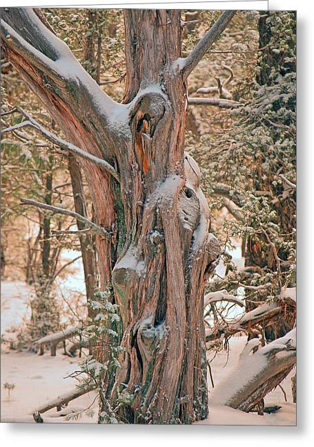 Snowy Dead Tree Greeting Card