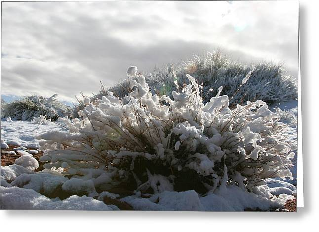 Snowy Desert Plant Greeting Card by Angie Wingerd