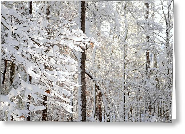 Snowy Dogwood Bloom Greeting Card