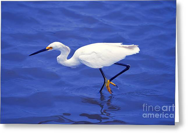 Greeting Card featuring the photograph Snowy Egret 1 by Bill Holkham