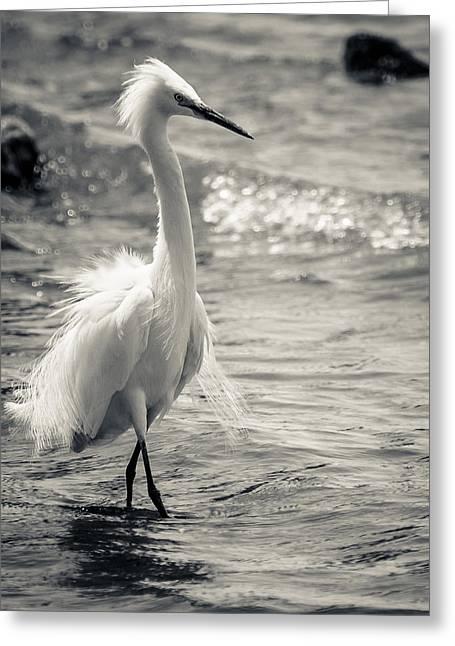Snowy Egret At Lake Chapala Greeting Card by Dane Strom