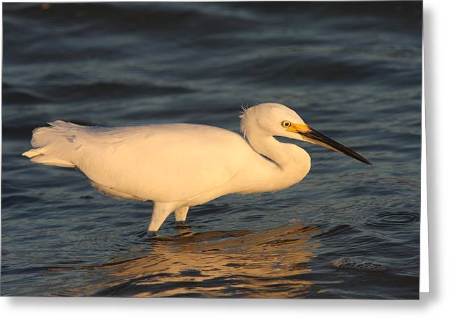 Snowy Egret By Sunset Greeting Card by Christiane Schulze Art And Photography