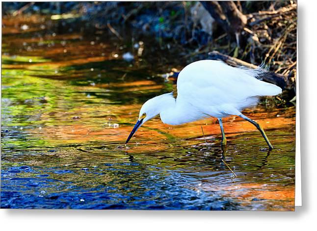 Snowy Egret Hunting 2 Greeting Card