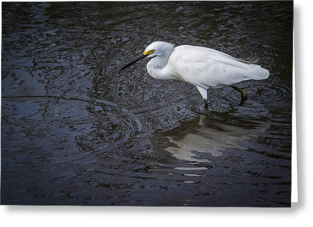 Snowy Egret Hunting Greeting Card