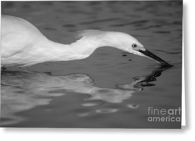 Greeting Card featuring the photograph Snowy Egret Illuminated by John F Tsumas