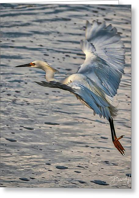 Snowy Egret Landing Greeting Card