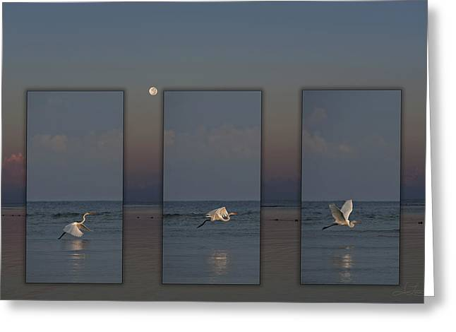 Snowy Egret Moon Greeting Card