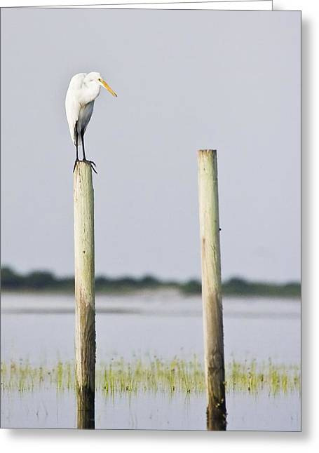 Greeting Card featuring the photograph Snowy Egret On Pilings by Bob Decker