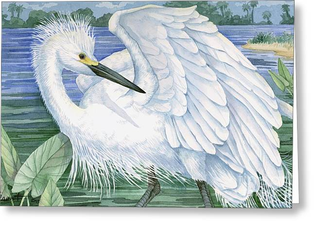 Snowy Egret Greeting Card by Paul Brent