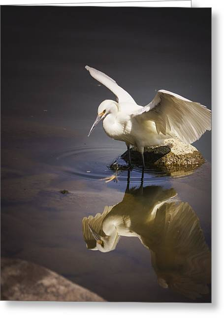 Snowy Egret Reflection Greeting Card by Janis Knight