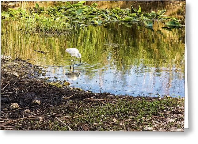 Snowy Egret Reflections Greeting Card