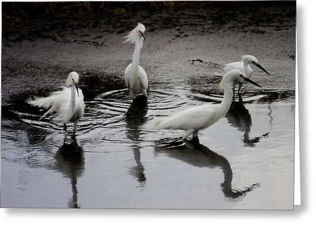 Snowy Egrets I Greeting Card by Jane Melgaard