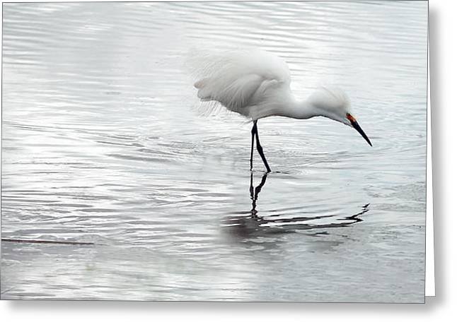 Snowy Egrets Greeting Card