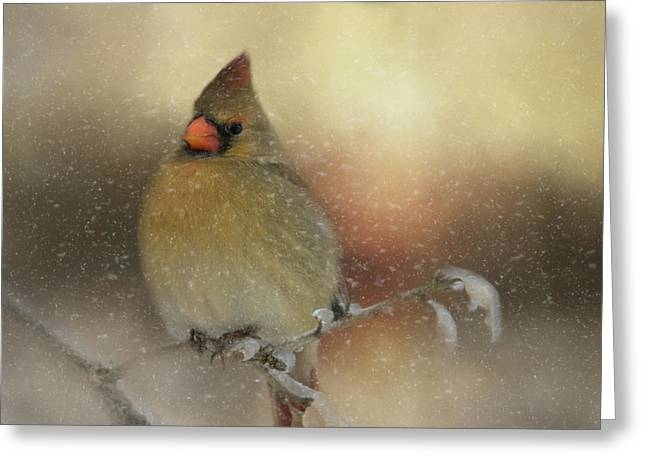 Greeting Card featuring the photograph Snowy Female Cardinal by Lana Trussell