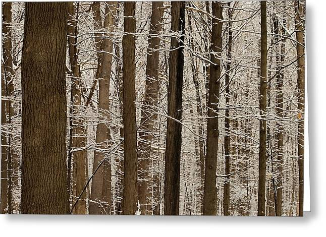 Snowy Forest Elevation Greeting Card
