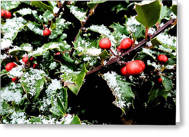 Snowy Holly Greeting Card
