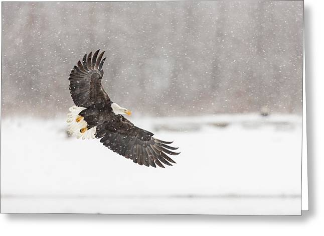 Snowy Landing Greeting Card by Tim Grams
