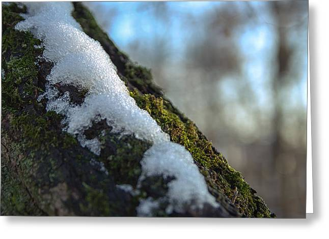 Snowy Moss Greeting Card by Thubakabra
