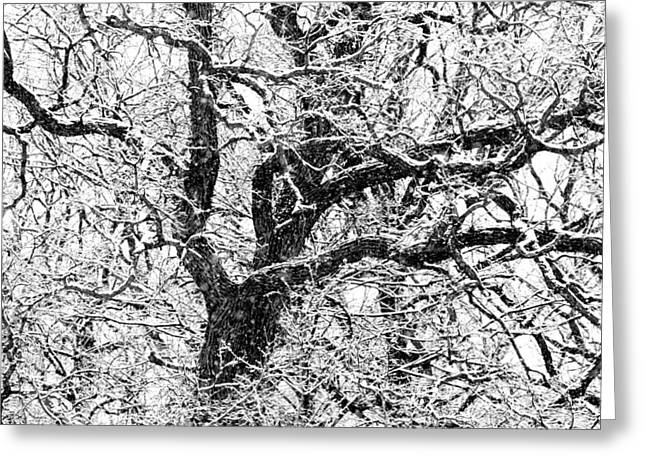 Snowy Oak Greeting Card
