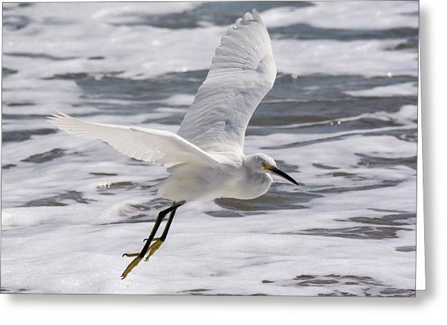 Snowy On The Wing Greeting Card by Bruce Frye