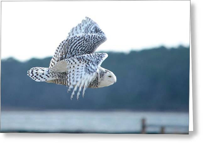 Snowy Owl 1 Greeting Card