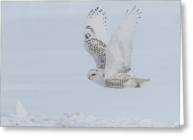 Greeting Card featuring the photograph Snowy Owl #3/3 by Patti Deters