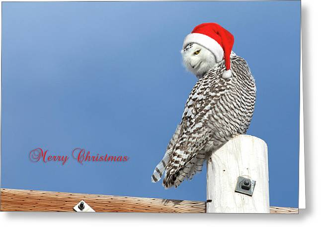 Greeting Card featuring the photograph Snowy Owl Christmas Card by Everet Regal