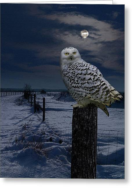Snowy Owl On A Winter Night Greeting Card