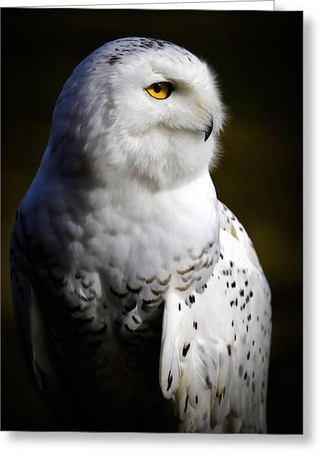 Snowy Owl Portrait Greeting Card by Athena Mckinzie