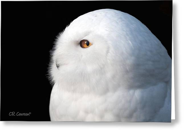 Courson Greeting Cards - Snowy Owl Portrait Greeting Card by CR  Courson