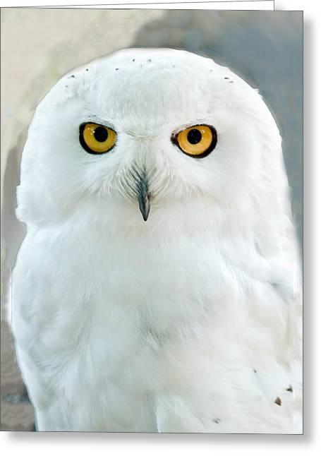 Snowy Owl Portrait Greeting Card