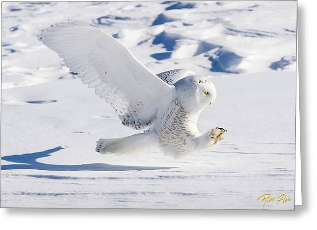 Snowy Owl Pouncing Greeting Card by Rikk Flohr
