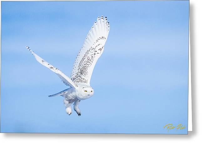 Snowy Owls Soaring Greeting Card