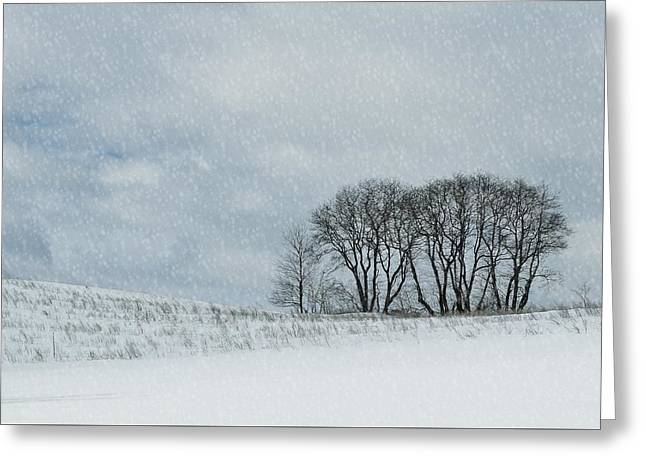 Snowy Pasture Greeting Card by JAMART Photography