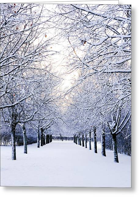 Snowy Pathway Greeting Card by Marius Sipa