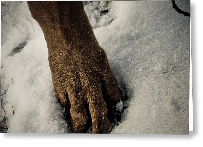 Snowy Paw Greeting Card by Melissa  Riggs