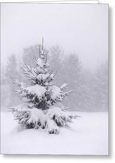 Snowy Pine Tree Greeting Card by Lori Deiter