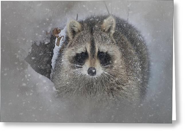 Snowy Raccoon Greeting Card