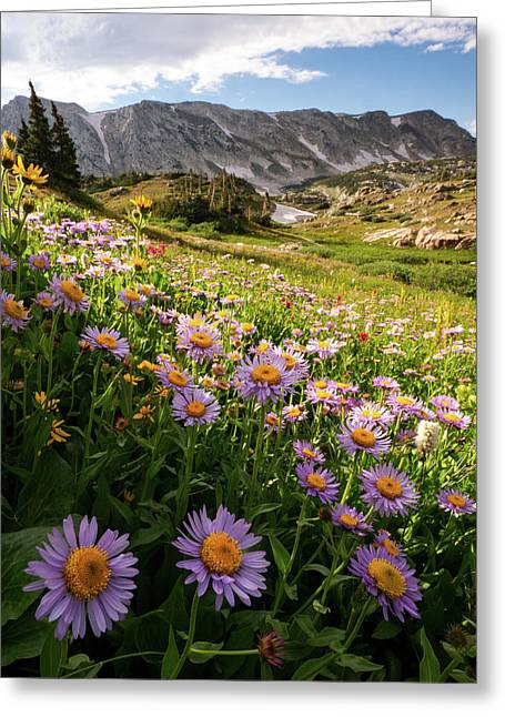 Snowy Range Flowers Greeting Card