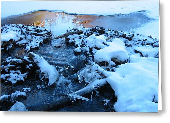 Snowy Reflections Greeting Card by Angela Murray