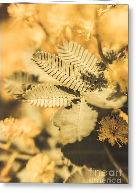 Snowy River Wattle Greeting Card by Jorgo Photography - Wall Art Gallery